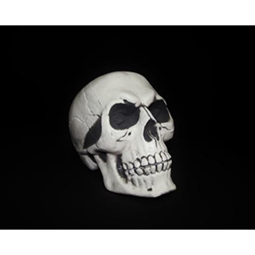 Crânio-2990